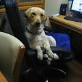 写真: 椅子に座る犬