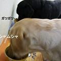Photos: ご飯の時間 073