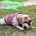 Photos: マイペースね・・