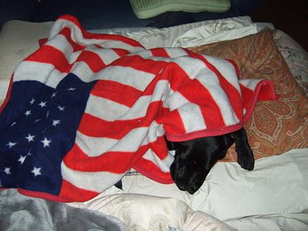 犬が寝てるには見えないな