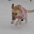 Photos: 雪だ~