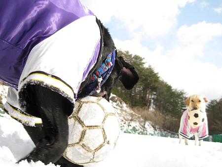 太陽と雪とサッカー