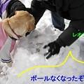 Photos: ボール埋められた~