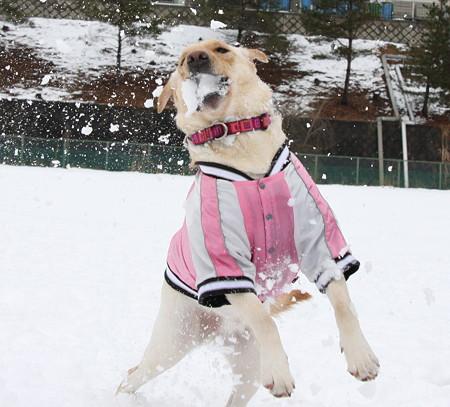 雪は決して出さない!