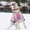 Photos: 雪は決して出さない!