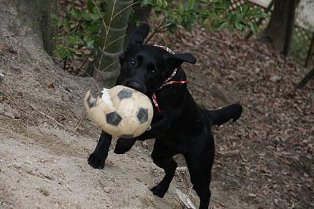 ボール回収