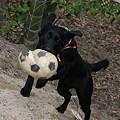 Photos: ボール回収