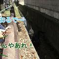 Photos: ギャラリーが・・・