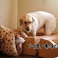 Photos: 瞬殺