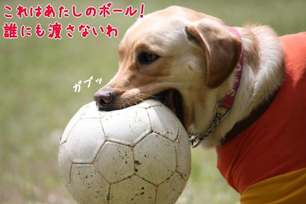 Photos: 大口