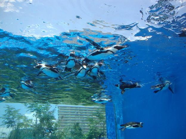 天空のペンギン2