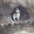 写真: 巣穴からこんにちは