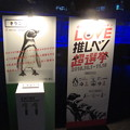 Photos: 推しペン選挙