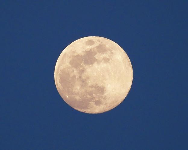 写真: 月齢13.3
