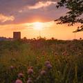 写真: 夕日はすべてを染める