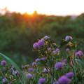 写真: さよなら太陽