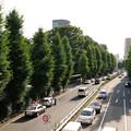 写真: 銀杏並木と取り締まり