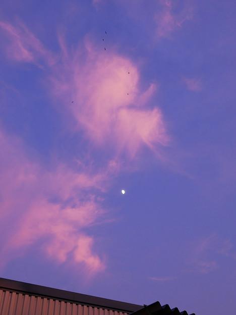 桃色高雲 月に鷺?