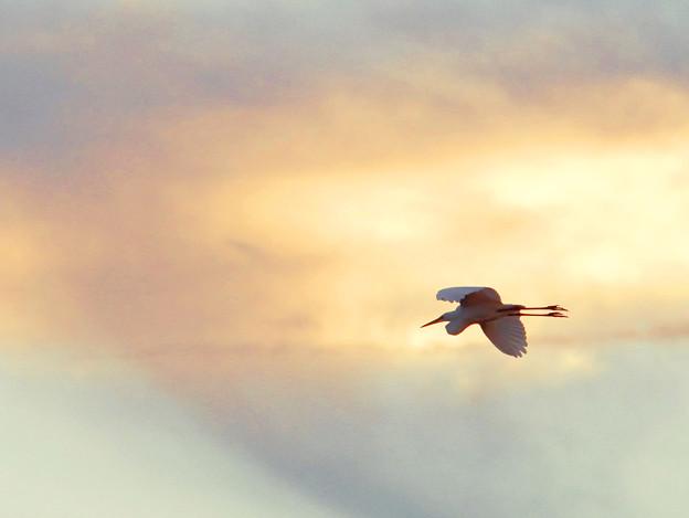 写真: 黄昏の空を飛ぶ2