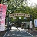 写真: 巾着田曼珠沙華公園