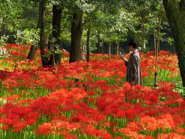 赤いお花畑