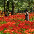 写真: 赤いお花畑