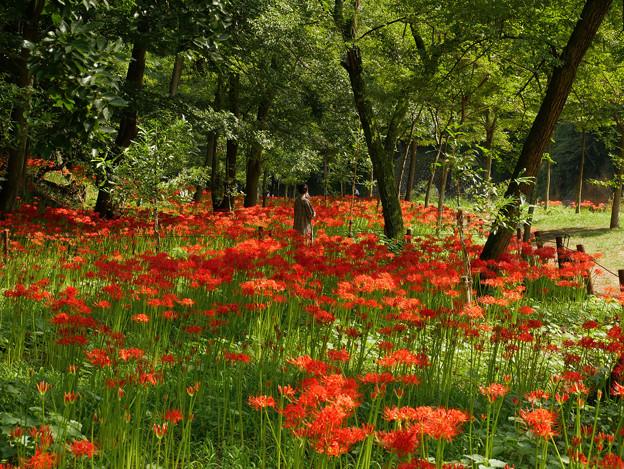 赤いお花畑…