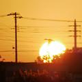 写真: 日の出とカモ