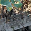 写真: カワセミ2羽