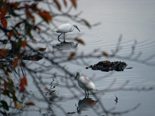 秋の小川で獲物探し