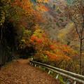 落ち葉の旧道