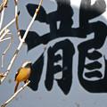 Photos: ジョウビ瀧?!発見!