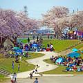 Photos: 春の公園の休日