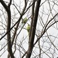 Photos: あたまの上に春が?