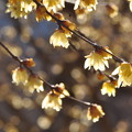 写真: 春煌
