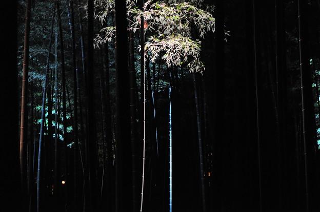 竹の散歩道 偕楽園3
