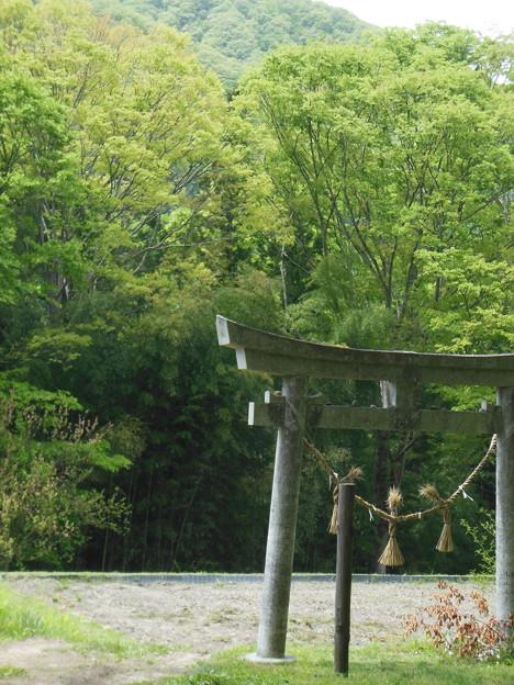 GW(4/30) 有りました~!八王子神社