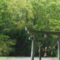 写真: GW(4/30) 有りました~!八王子神社