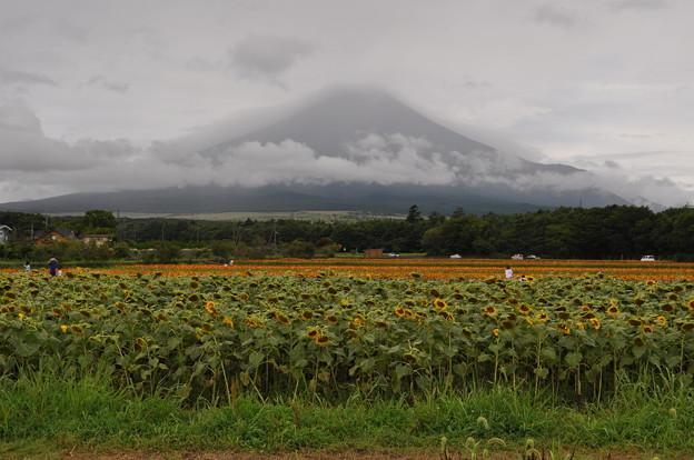 シャイな富士山