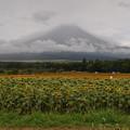 写真: シャイな富士山