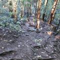 写真: 紅葉狩のはずが 1 尾根道へ