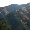 写真: 紅葉狩のはずが 2 錦の山