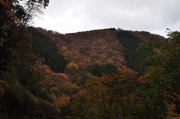 紅葉狩のはずが 3 曇り空