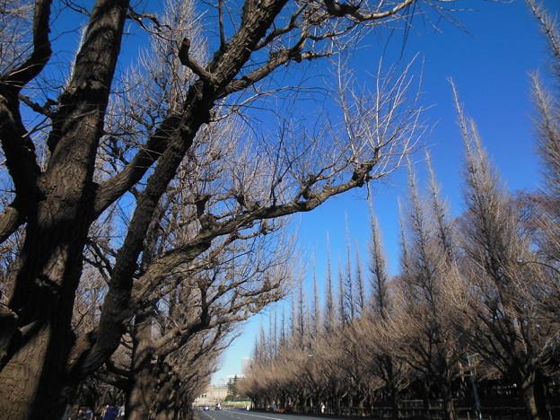 Photos: 巡る季節