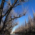 写真: 巡る季節