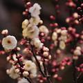 Photos: 春隣