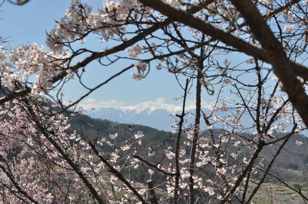桃源郷1 桜と南アルプス