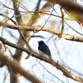 Photos: 霧降高原・龍王峡6 青い鳥~♪