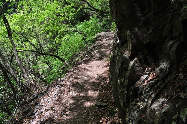 5月5日の山のぼり~♪1 細い道