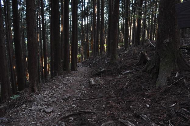 5月5日の山のぼり~♪9 長い道程